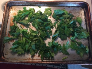 Fresh celery leaves, ready for drying
